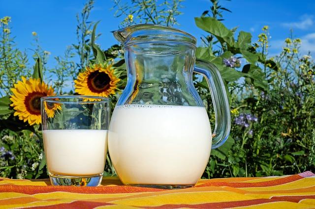 mléko u slunečnic.jpg